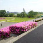 第3回 UP RUN 板橋区荒川河川敷戸田橋マラソン大会(2019/05/04「5レース/GW7レース」)