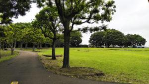 梅雨どきの公園散歩